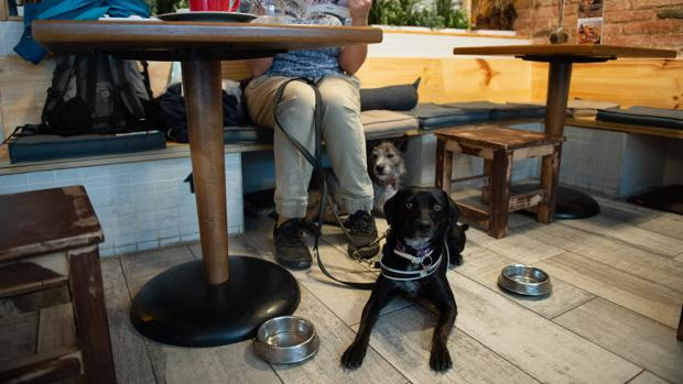 Un cliente de Entre Dogs, acompañado por su mascota