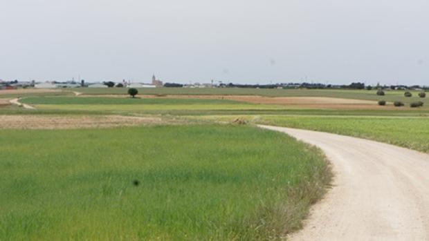 Camino cercano a la localidad albaceteña de La Roda