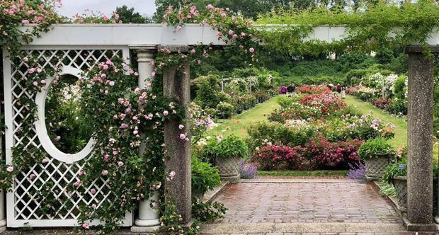 Rosaleda del Botánico de Brooklyn
