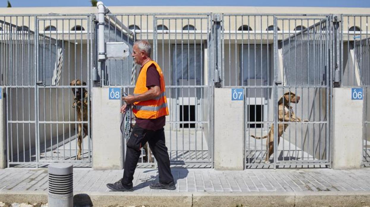 Alerta en madrid colapso en las perreras - Perrera de vilafranca ...