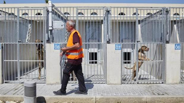 Alerta en Madrid: colapso en las perreras