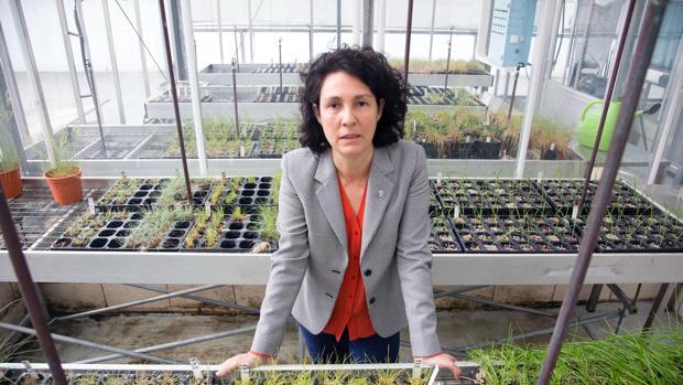 Mar Siles es la directora del Instituto de Recursos Naturales y Agrobiología, además de la nueva delegada territorial del CSIC