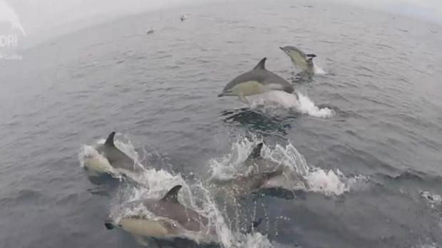 Vista de los delfines, muy cerca de las Islas Cíes