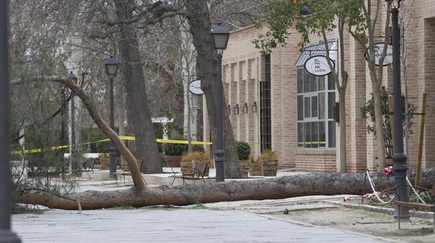 Árbol caído en uno de los paseos del parque de El Retiro