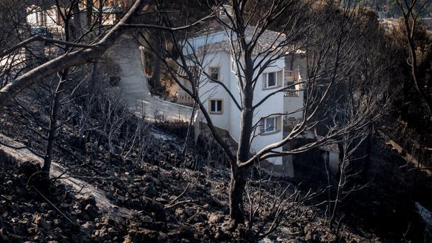 Una zona afectada por el fuego