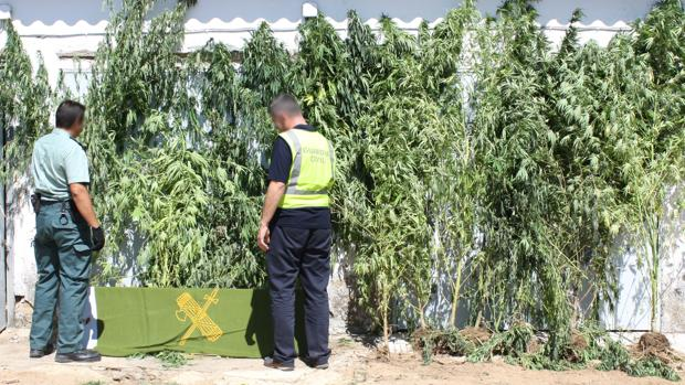 Foto de archivo de una incautación de marihuana
