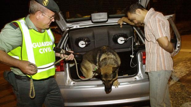 Un perro de la Guardia Civil inspecciona un vehículo en un control de drogas
