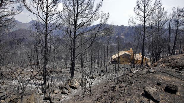 Imagen de una parte de las zonas afectadas por el incendio