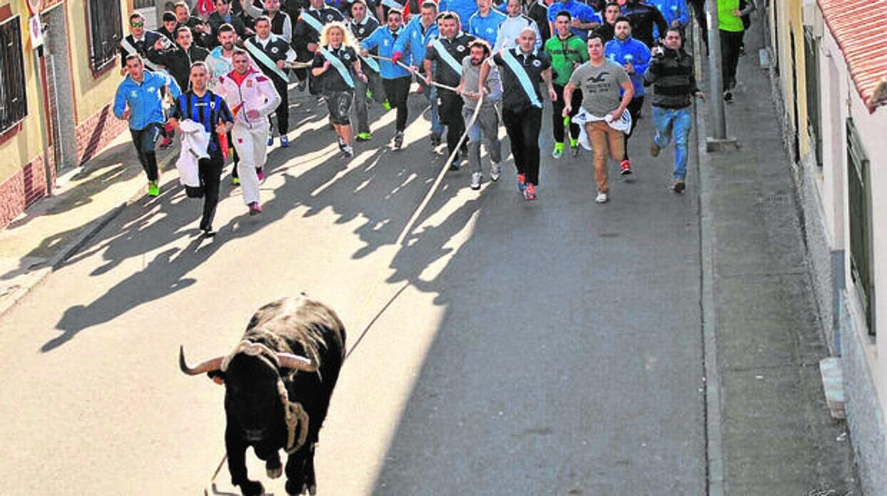 Un herido por cornada en los festejos del toro enmaromado de Yuncos