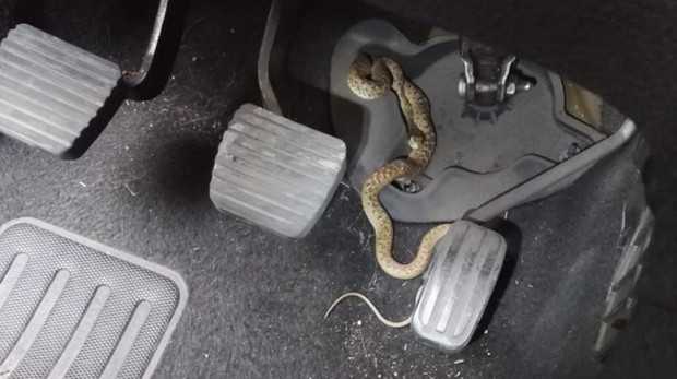[Imagen: serpiente-vehiculo-alcorcon-kxfD--620x349@abc.jpg]