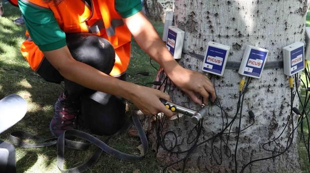Un técnico revisa la resistencia de la madera con un resistógrafo