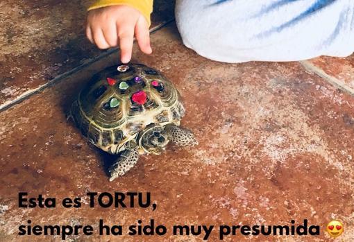 La tortuga de Noa, desaparecida desde el día 10