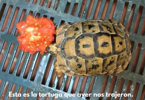 Imagen de la otra tortuga