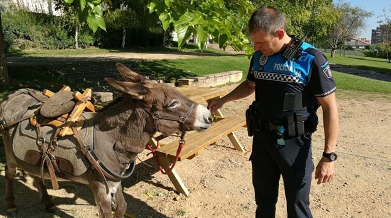 Un peregrino francés deja un burro en un parque de Valladolid mientras pasa la noche en un hotel