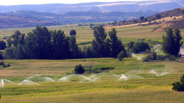 Regadíos en un campo de Castilla-La Mancha