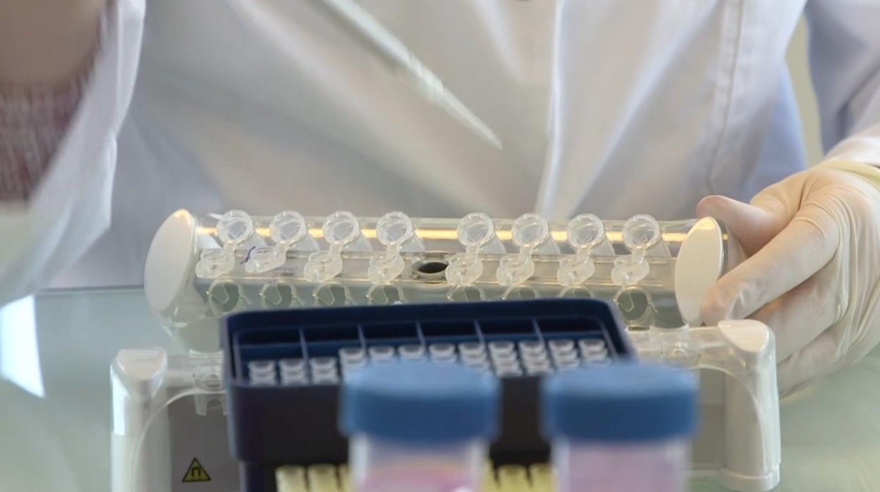 Una investigación genómica consigue predecir el 80% de los tumores