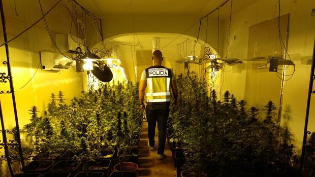 Imagen de una operación de la Policía Nacional contra el tráfico de marihuana