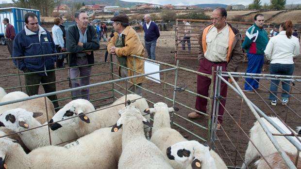 Un gran número de ganaderos, con sus rebaños, se han acercado a la feria