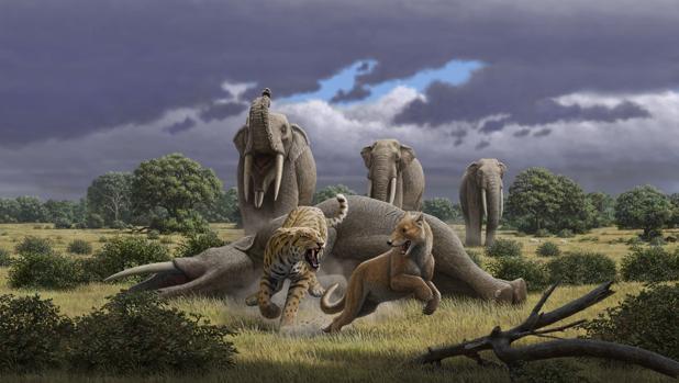 La megafauna del Mioceno protagonizará la última exposición del curso