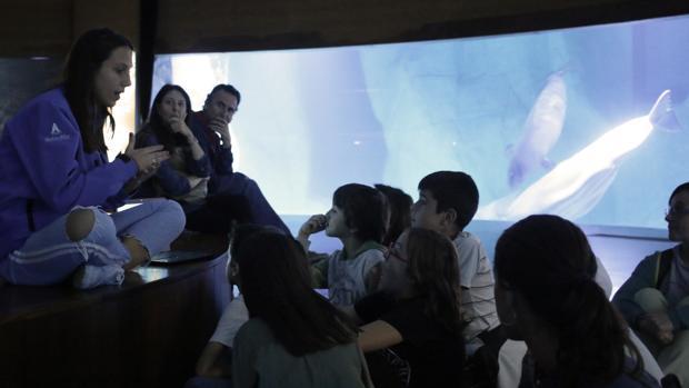 Explicando ciencia junto a las belugas