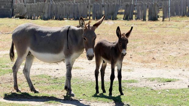 Foto de archivo de dos equinos
