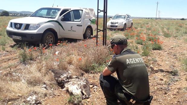 Un agente medioambiental observa a una ave rapaz muerta