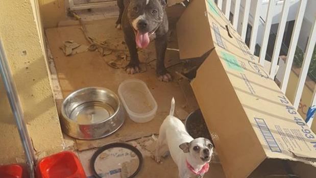 Imagen de los perros abandonados