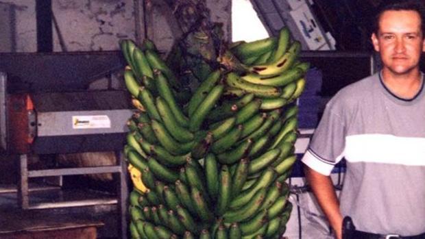 El racimo de plátanos más grande conocido se cultivó en 2001 en El Hierro, contenía 473 plátanos y pesaba 130 kilos