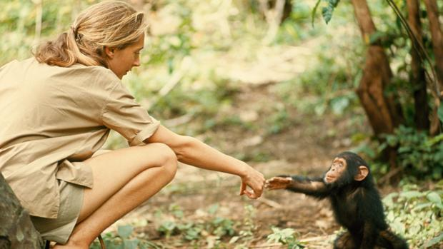 Jane Goodall, fotografiada por Hugo Van Lawick