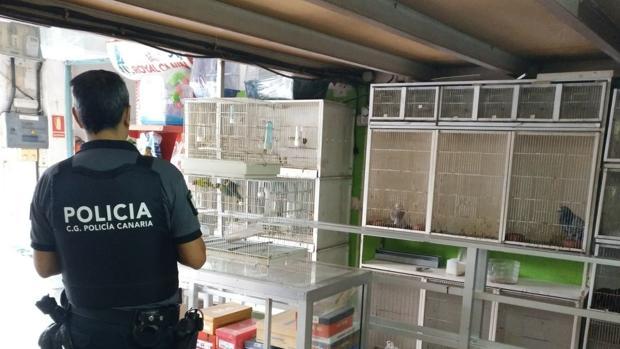 Agentes de la Policía Canaria revisan tiendas de venta de animales para controlar ventas de especies protegidas