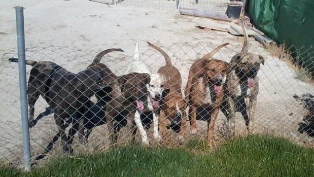 Varios perros pertenecientes a la familia de las víctimas