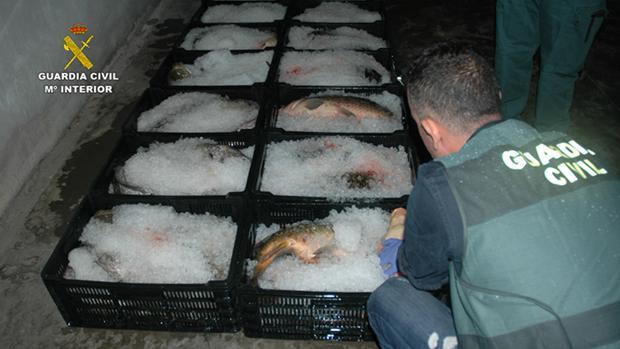 Parte de las cajas con pescado de procedencia ilícita que han sido intervenidas por la Guardia Civil