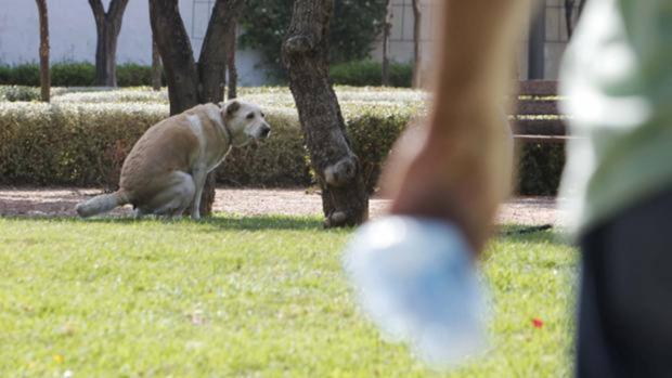 Imagen de archivo de un perro en un parque público con su dueño