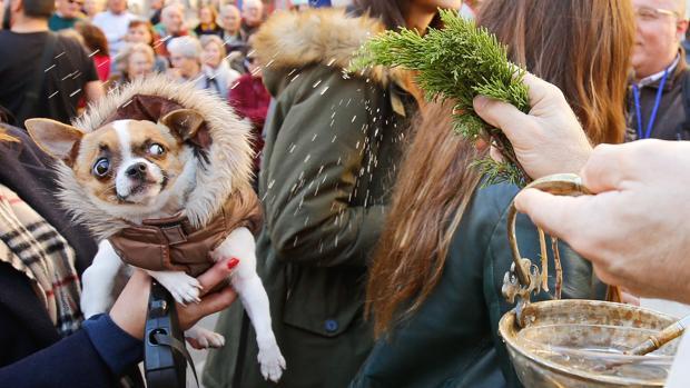 Valencia celebra este jueves el desfile para bendecir a sus animales por las fiestas de San Antonio Abad
