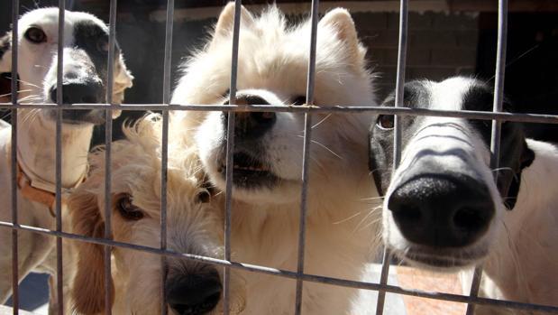 Perros dentro de la perrera