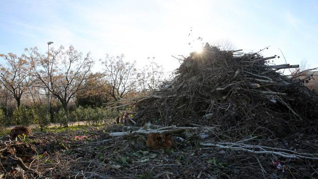Imagen de archivo de una tala de árboles