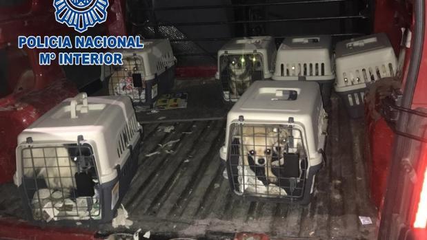 Los perros rescatados en la operación