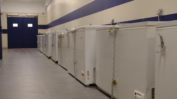 Arcones frigoríficos en el nuevo Centro de Donacíon de cuerpos de la Complutense