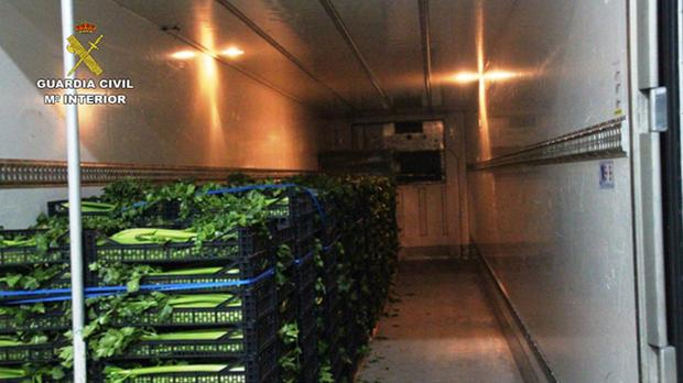 Droga escondida dentro del camión, entre las verduras
