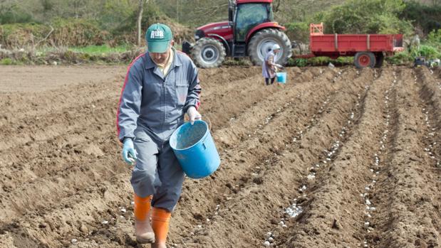 La lucha contra la plaga de la patata se cobra 500 toneladas de cosechas