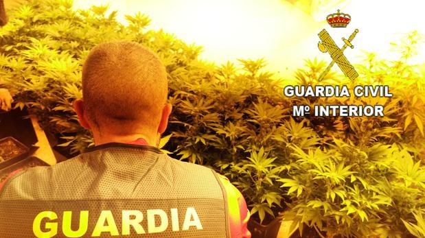 Inspección a una plantación ilegal de marihuana