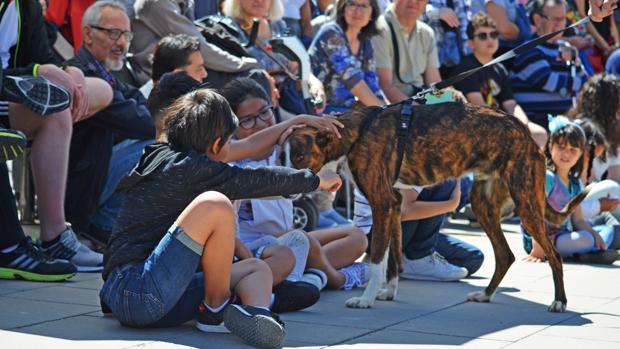 Imagen del desfile de perros abandonados en Valencia este domingo