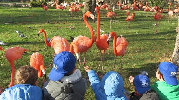 Los niños aprenderán la importante labor de preservar las especies amenazadas que habitan el planeta