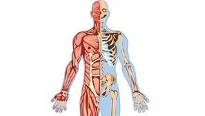 Diez cambios muy significativos de tu organismo a partir de los 65 años