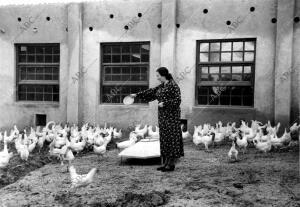 Un gallinero modelo en los Alrededores de Madrid, cuidado en la retaguardia por...