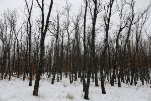 reportaje de la nieve en Distintas Zonas de la Sierra de Madrid foto Jaime...