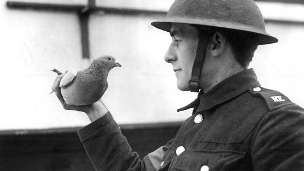 Un soldado aliado con una de las palomas que se iba a enviar durante la Segunda Guerra Mundialñ