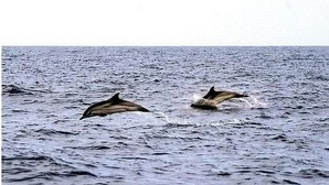 Delfines en las costas españolas