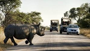 Un rinoceronte en el Parque Nacional Kruger
