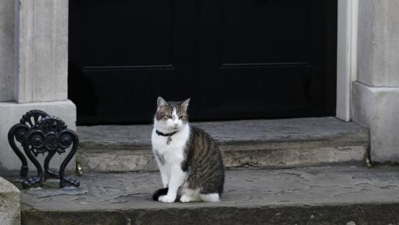 El gato de Downing Street